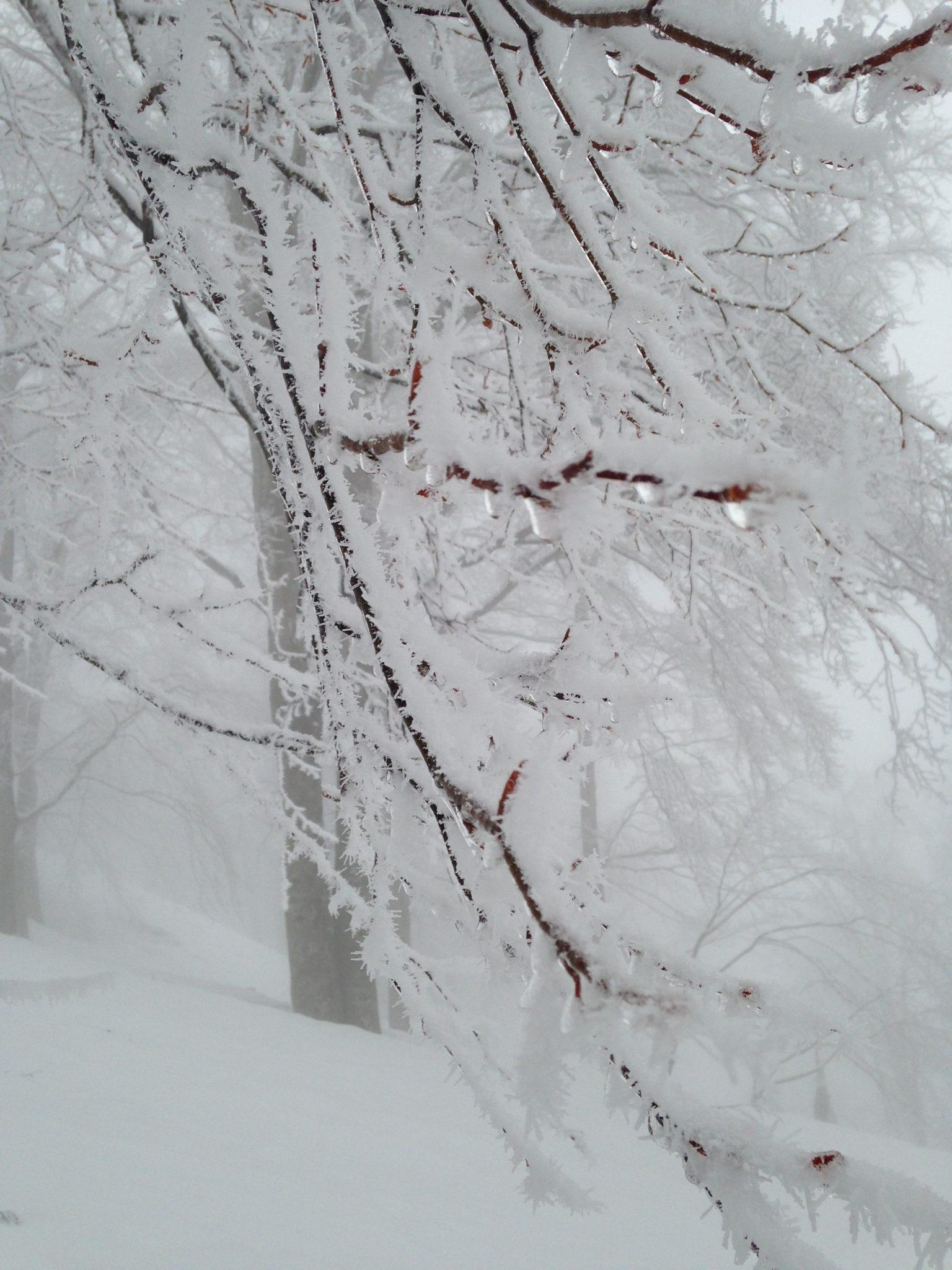 春なのにー冬みたい