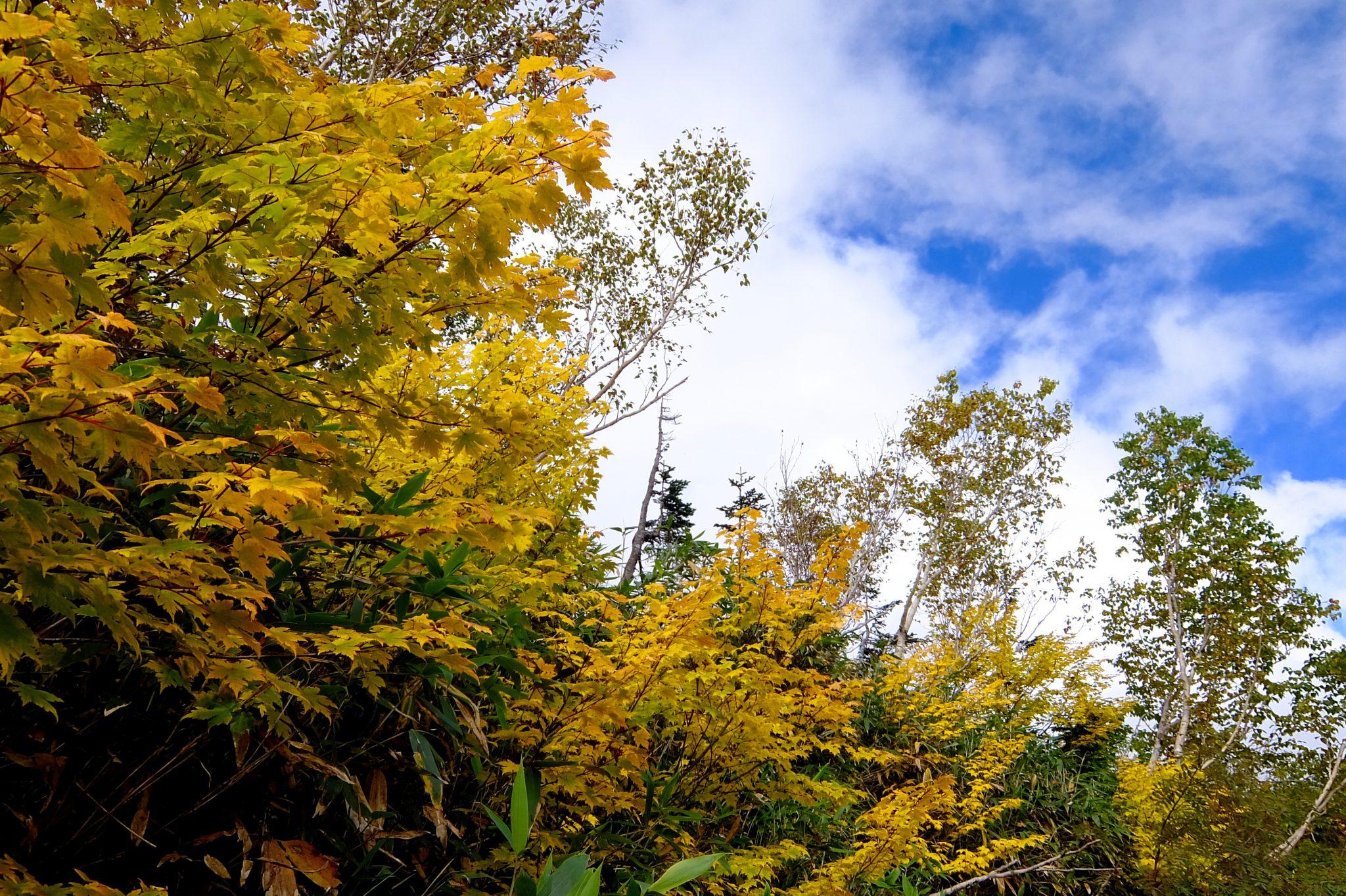 紅葉始まりました〜栂池自然園