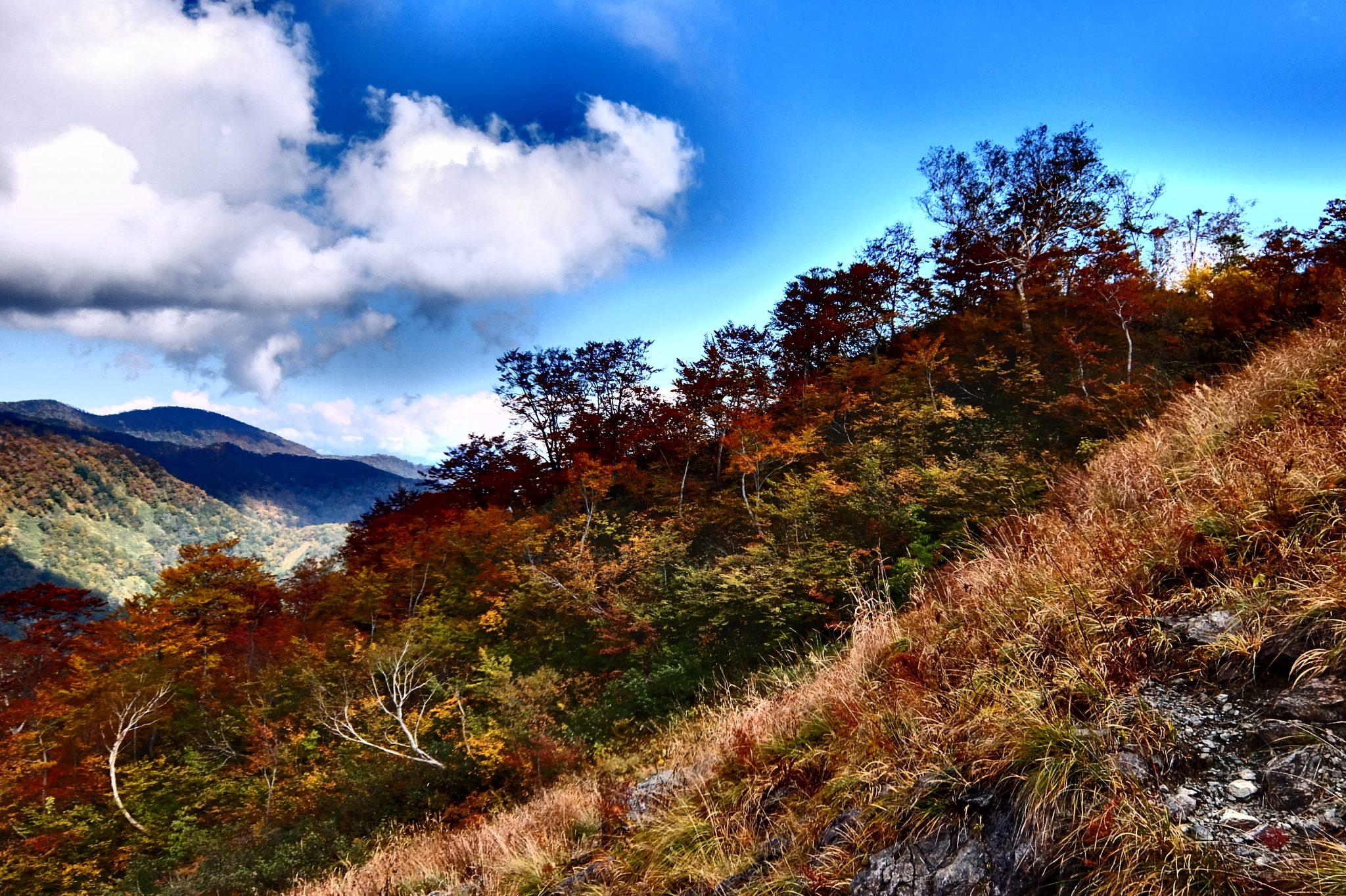 小日向山の紅葉