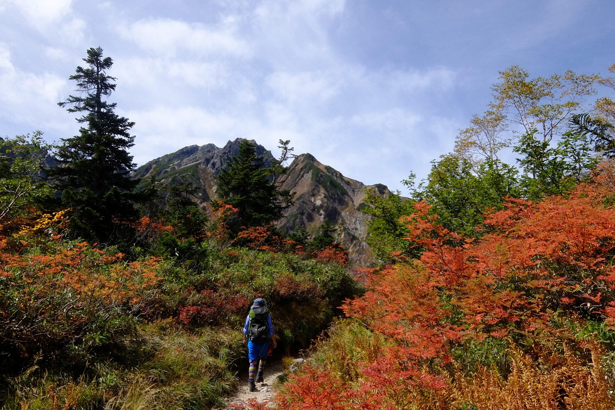 秋のトレッキング 遠見尾根